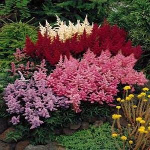 Summer flower summer perennial flowers summer perennial flowers mightylinksfo
