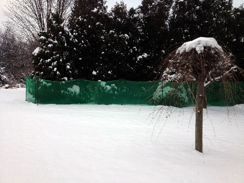 arborvitae, deer, pest, netting, winter, protection, pictures, images, jpeg